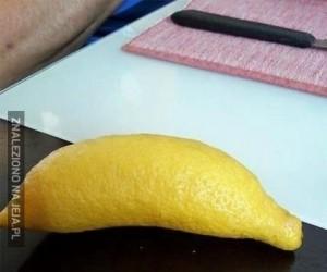 Banan czy cytryna?