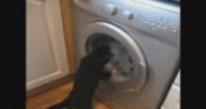 Kot i pralka - niekończąca się walka