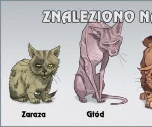 Cztery koty apokalipsy