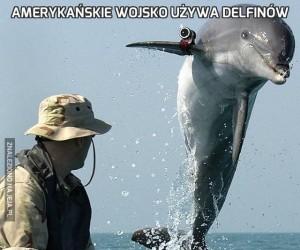 Amerykańskie wojsko używa delfinów