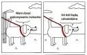 Pies w roli człowieka
