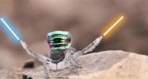 Moc jest silna w pająku tym