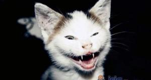 Niezdecydowany kot