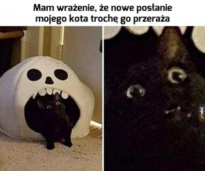 2spooky4meow