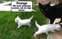 Zakłopotana kotka