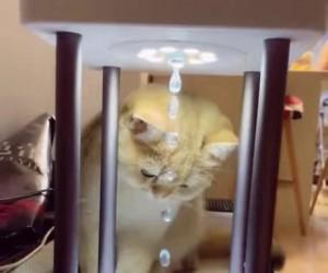 Kitek jest zdezorientowany