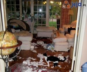 Niecodzienny porządek w mieszkaniu