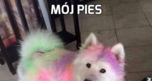 Mój pies