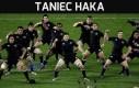 Taniec haka