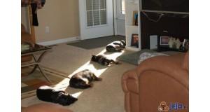 One też tęskniły za słońcem