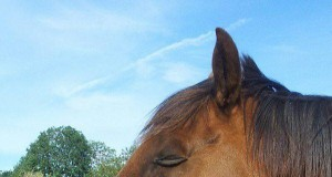 Koń Obcego