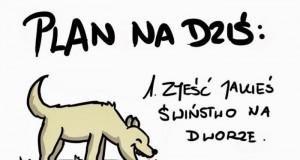 Dzień z życia psa