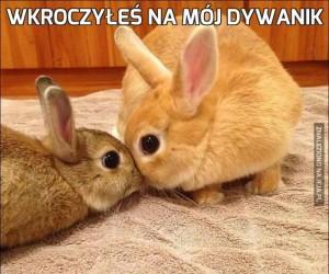 Wkroczyłeś na mój dywanik
