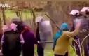 Babuszki kontra policja