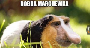 Świnka Janusz Morski