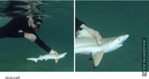 Gigant atakuje rekina