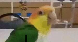 Wesoła papuga