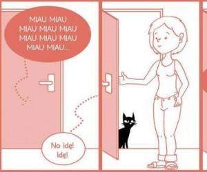 Koegzystencja z kotem