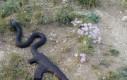 Wystrzałowy wąż