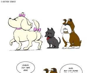 Istnieją dwa typy psów