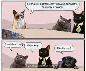 Memy z kotkami
