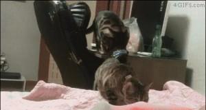 Kot sprężyna