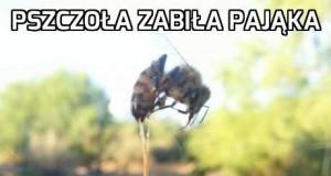 Zabójcza pszczoła