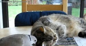 Pobudka koteł, koniec spania!