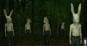 Tymczasem w sosnowieckim lesie