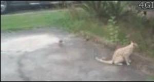 Nigdy nie zadzieraj z kotem!