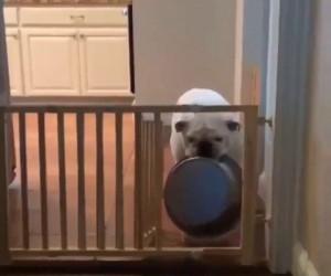 Ten pies lepiej rozwiązuje swoje problemy niż ja