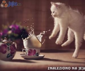 Kot, który boi się mleka