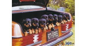 Bagażnik psów