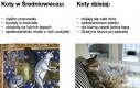 Koty dawniej i dziś