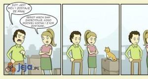 Jak koty martwią się rozwodem