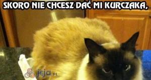 Kot sam sobie radzi najlepiej