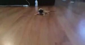 Jaszczurka włącza szósty bieg, nie dogoni nikt już jej