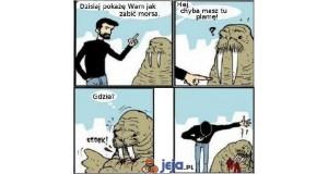 Jak zabić morsa