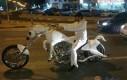 Książę na białym koniu