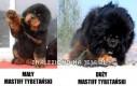 Mastiff Tybetański - Jest różnica?