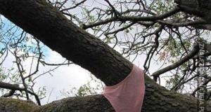Seksowne drzewo