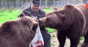 Bo trzeba się dzielić z niedźwiedziami