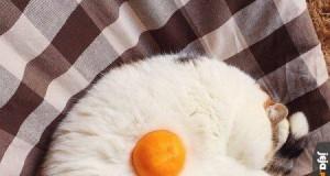 Kocie jajko
