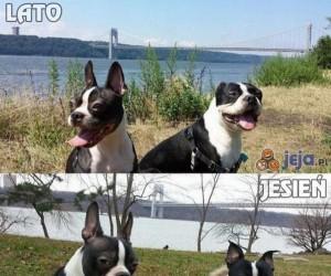 Psy też nie lubią jesieni...