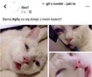 Z kotełem coś nie tak