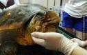 Kolejne zwierzę uratowane dzięki technologii druku 3D