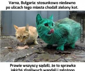 Zielony kot
