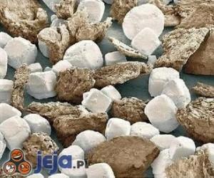 Sól i pieprz w powiększeniu