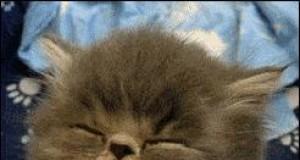 Śpiący koteł