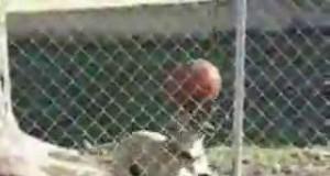 Ten pies zna więcej trików z piłką niż Ty